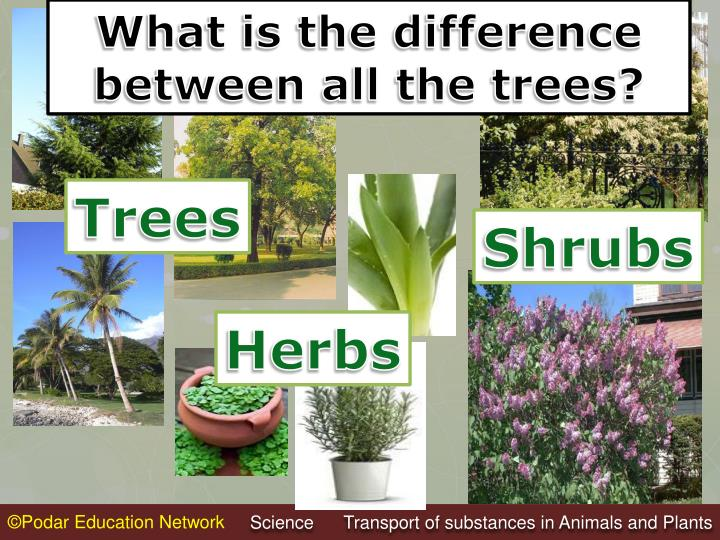 What is the difference between all the trees?