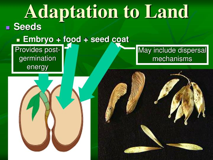 Adaptation to Land