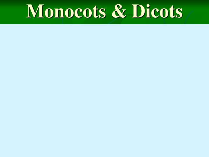 Monocots & Dicots