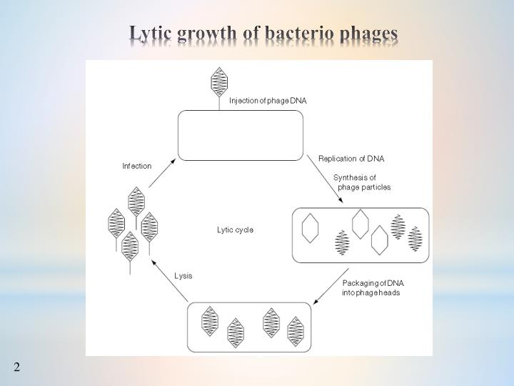 Lytic growth of