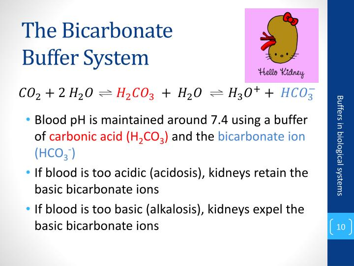 The Bicarbonate
