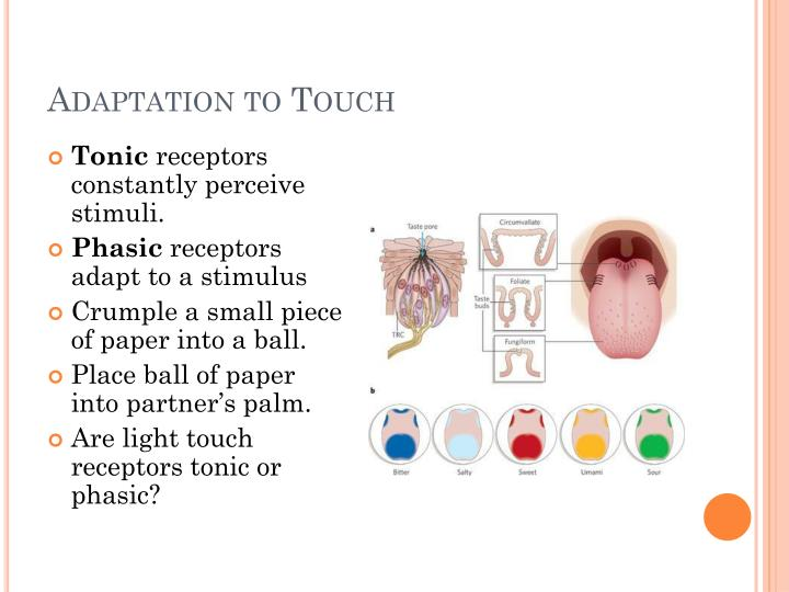 Adaptation to Touch