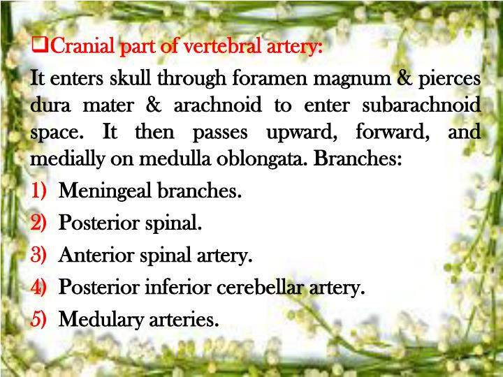 Cranial part of vertebral artery: