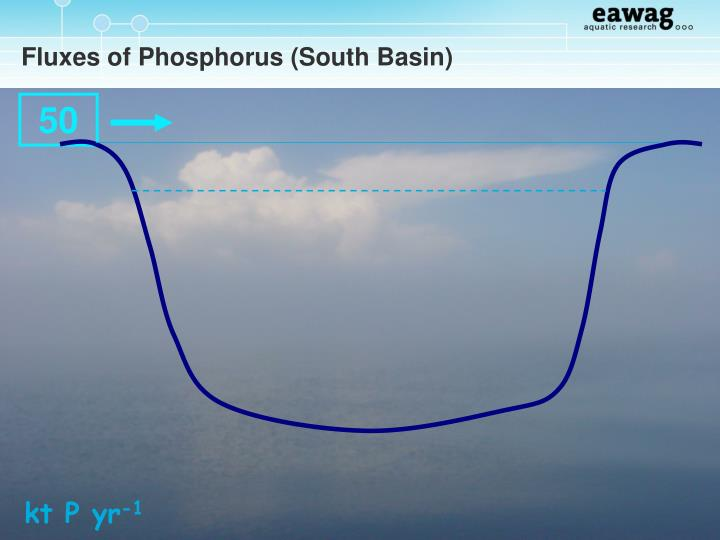 Fluxes of Phosphorus (South Basin)