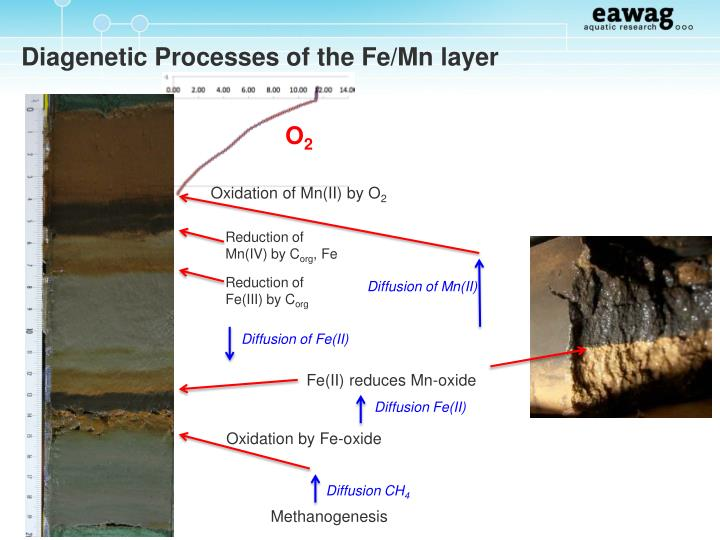 Diagenetic Processes of the Fe/Mn layer