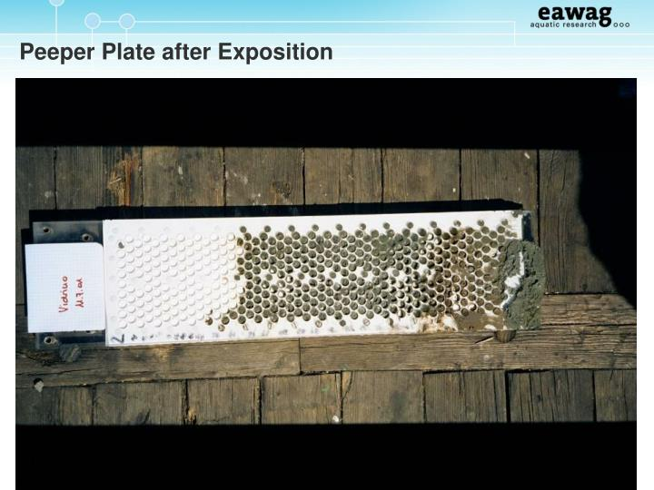 Peeper Plate after Exposition