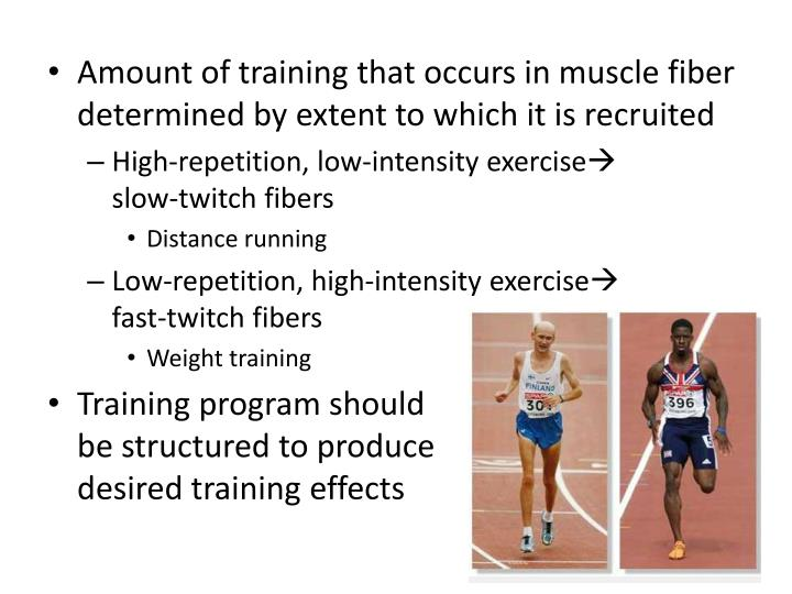 Amount of training that occurs in muscle fiber determined by extent to which it is recruited