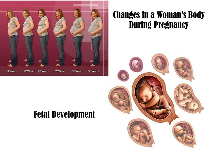 Changes in a Woman's Body