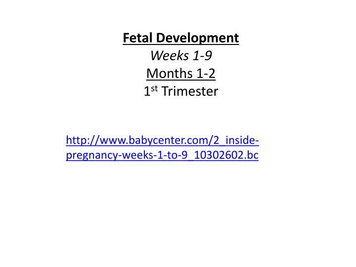 Fetal Development