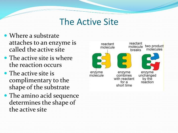 The Active Site
