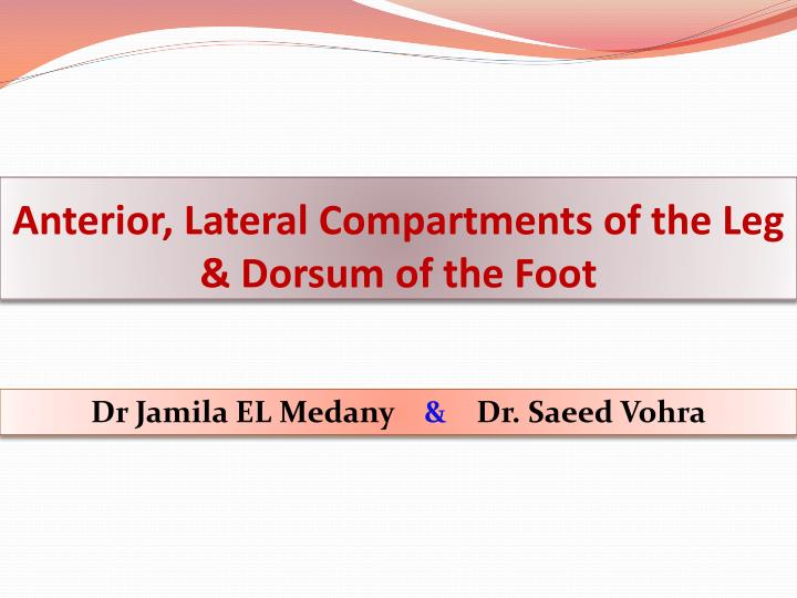 Anterior lateral compartments of the leg dorsum of the foot