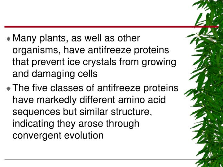 Many plants, as well as other organisms, have antifreeze proteins that prevent ice crystals from growing and damaging cells