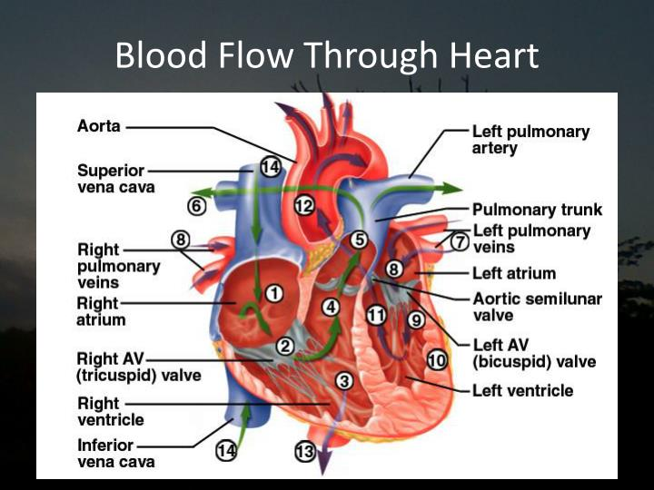 blood flow Systemic circulation is the part of the cardiovascular system which carries oxygenated blood away from the heart to the body, and returns deoxygenated blood back to the heart.