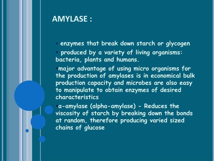AMYLASE :