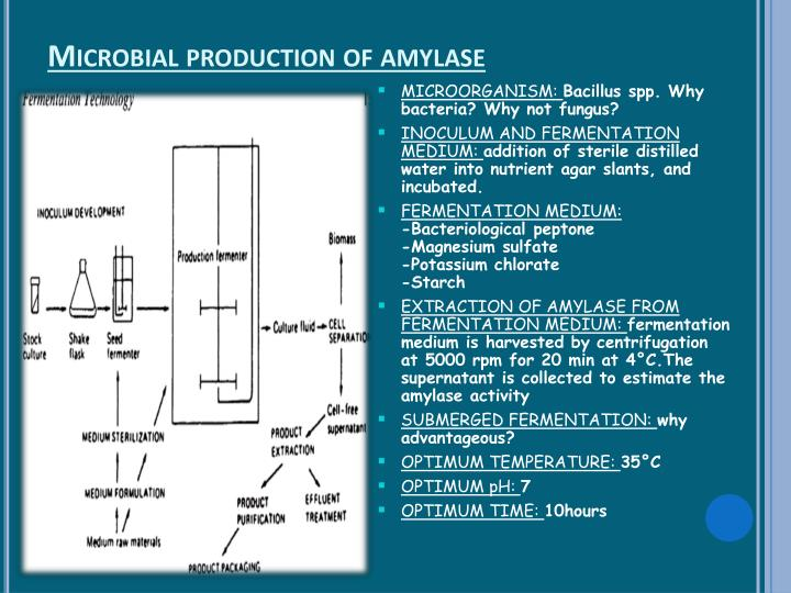 Microbial production of amylase