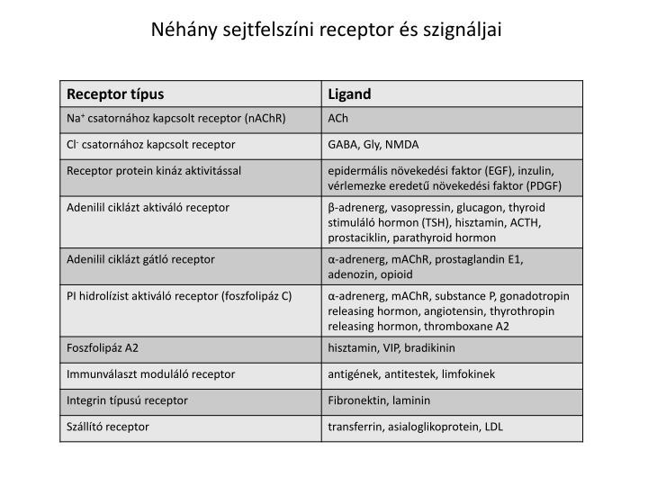 Néhány sejtfelszíni receptor és szignáljai