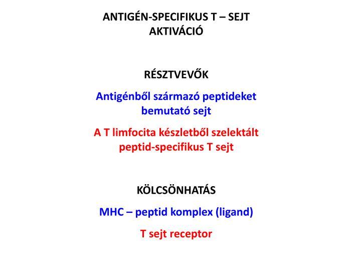ANTIGÉN-SPECIFIKUS T – SEJT AKTIVÁCIÓ