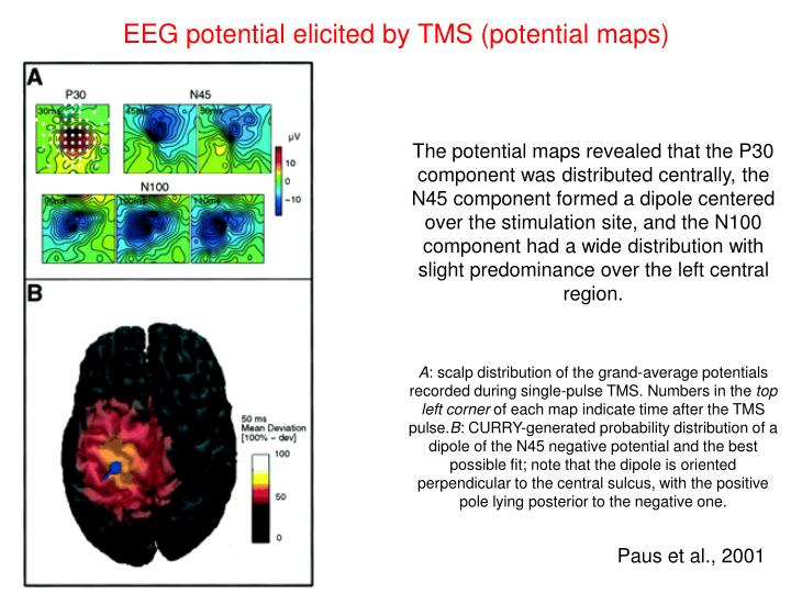 EEG potential elicited by TMS (potential maps)