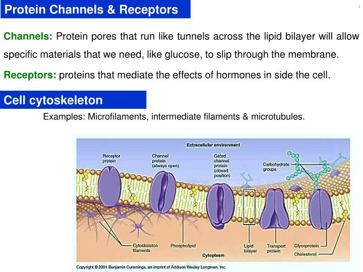 Protein Channels & Receptors