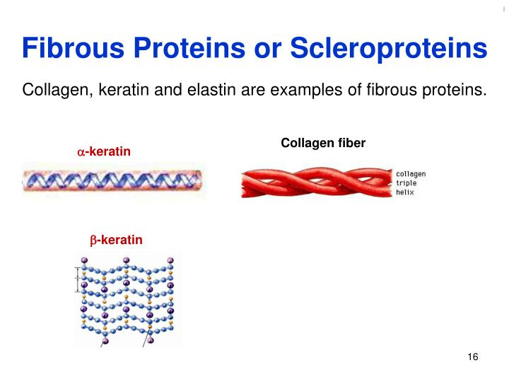 Fibrous Proteins or Scleroproteins