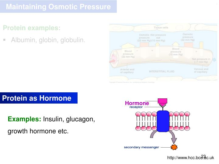Maintaining Osmotic Pressure