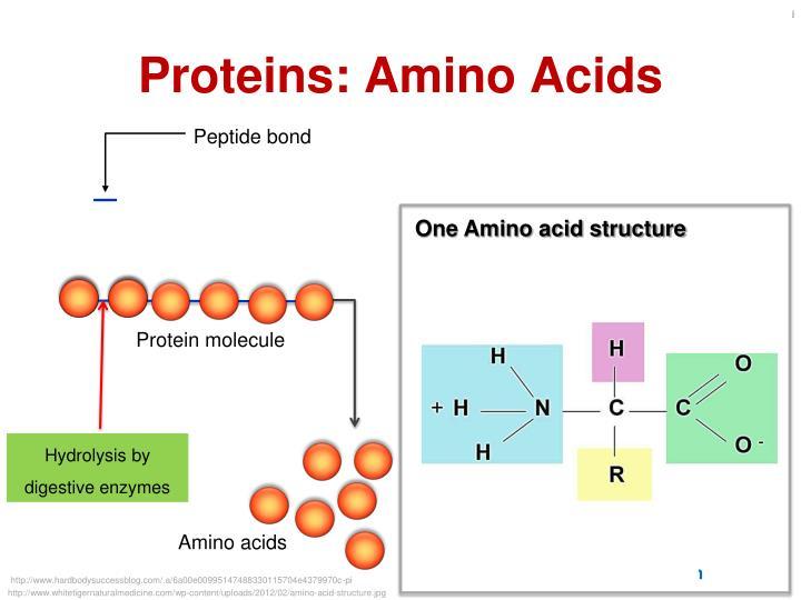 Proteins: Amino Acids