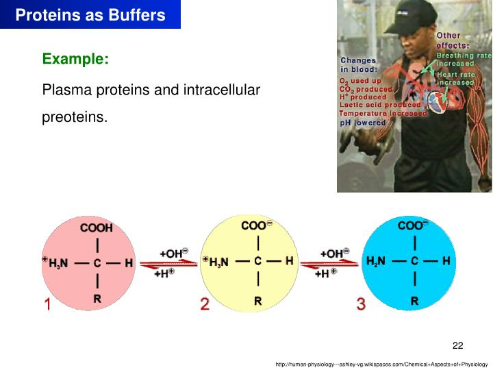 Proteins as Buffers