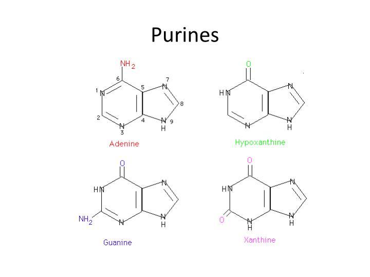 Purines
