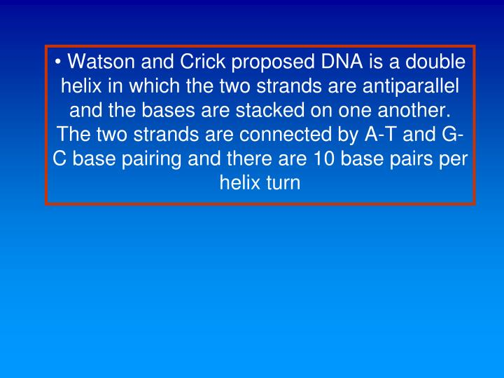 Watson and Crick proposed DNA is a double helix in which the two strands are antiparallel and the bases are stacked on one another. The two strands are connected by A-T and G-C base pairing and there are 10 base pairs per helix turn
