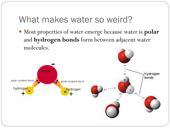 What makes water so weird?