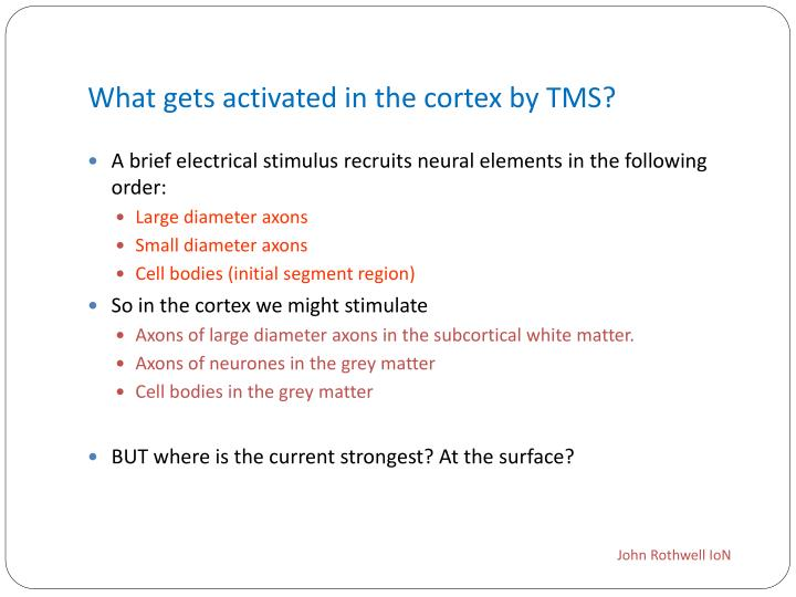 What gets activated in the cortex by TMS?