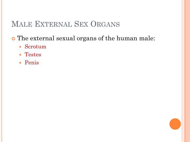 Male External Sex Organs