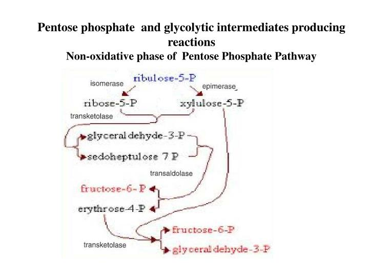 Pentose phosphate  and