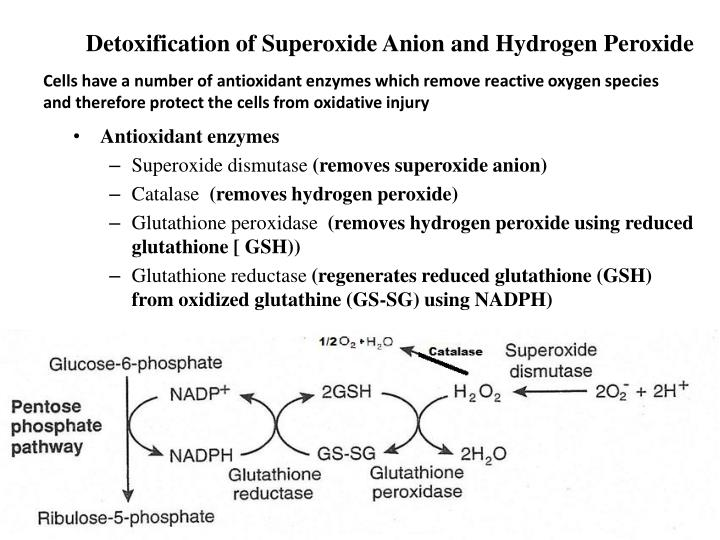 Detoxification of Superoxide Anion and Hydrogen Peroxide