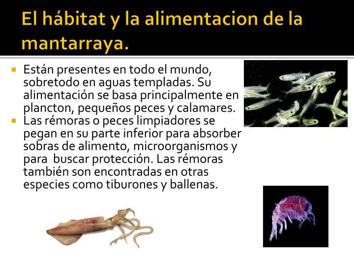 El hábitat y la