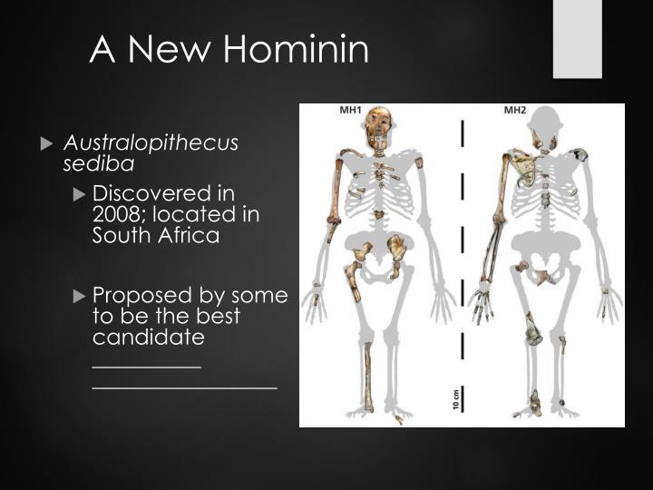 A New Hominin