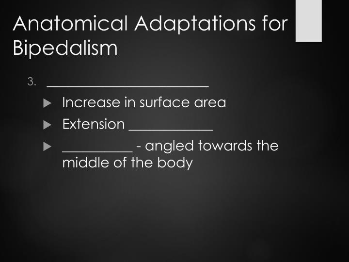 Anatomical Adaptations for Bipedalism