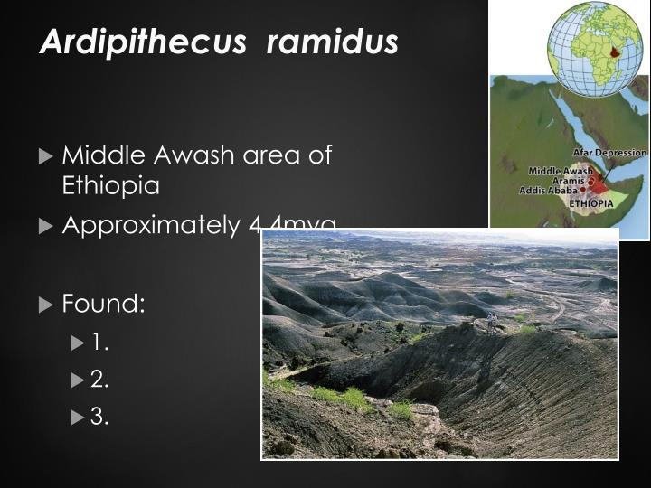 Ardipithecus