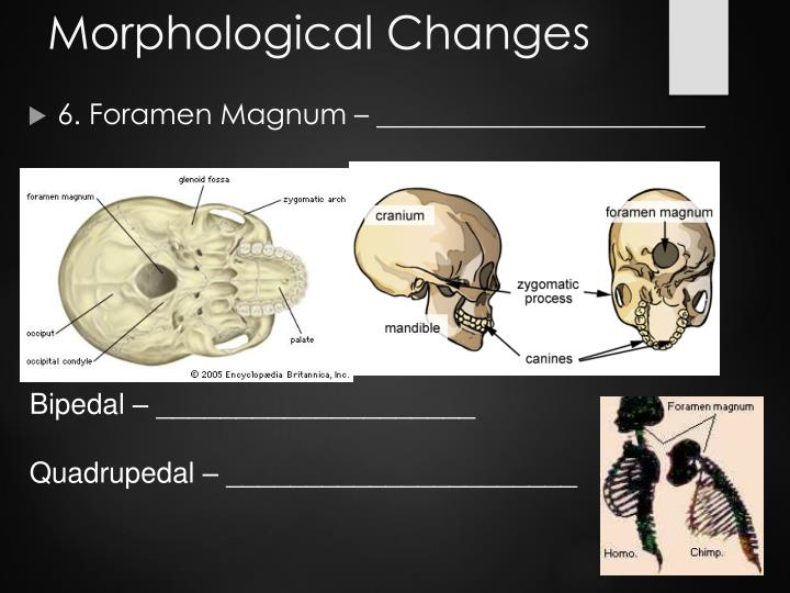 Morphological Changes