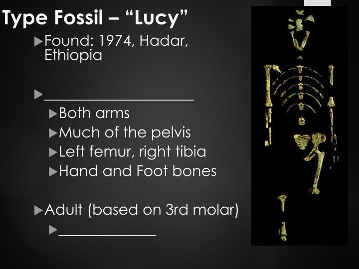 "Type Fossil – ""Lucy"""