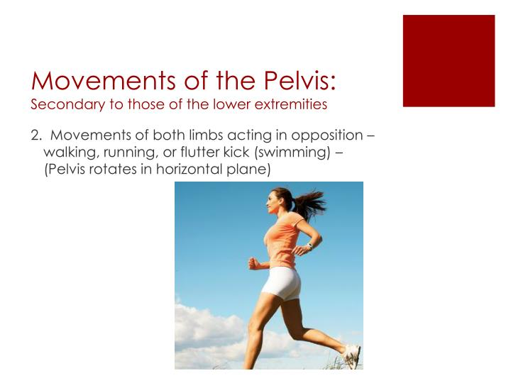 Movements of the Pelvis: