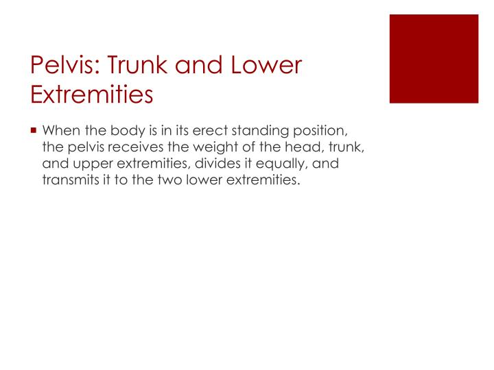 Pelvis: Trunk and Lower Extremities