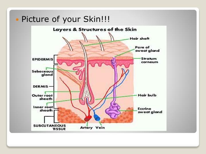 Picture of your Skin!!!