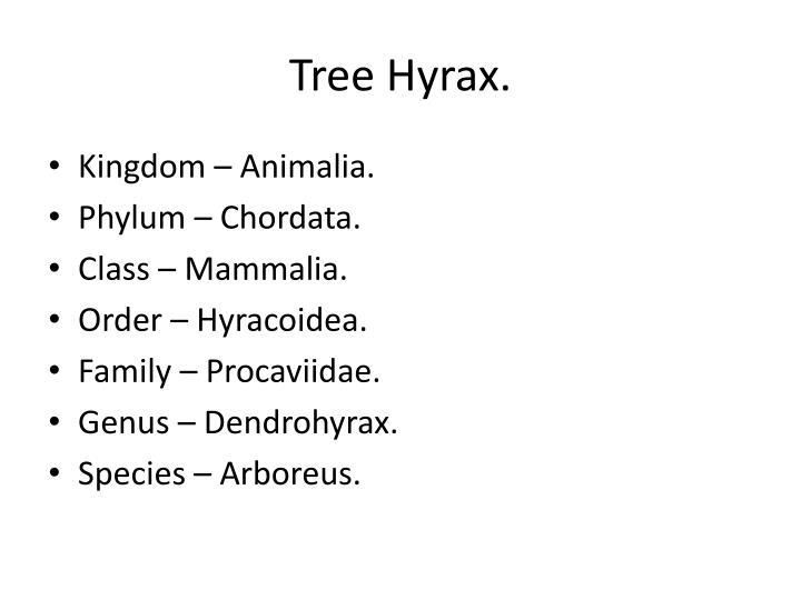 Tree Hyrax.