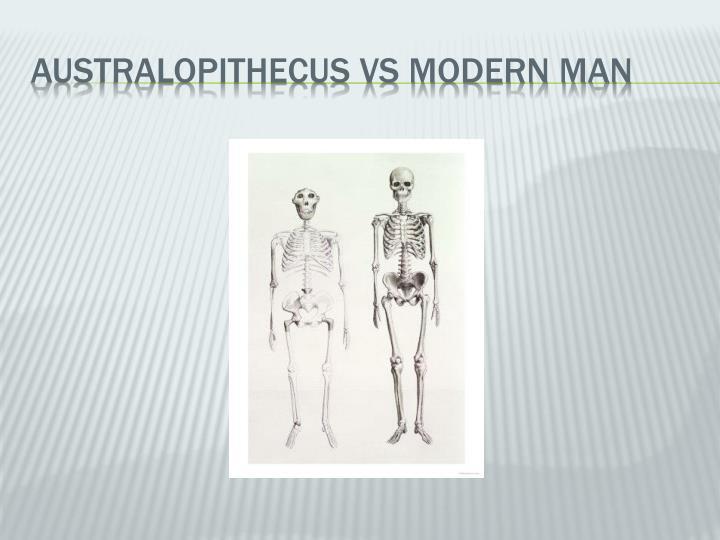 AUSTRALOPITHECUS VS MODERN MAN