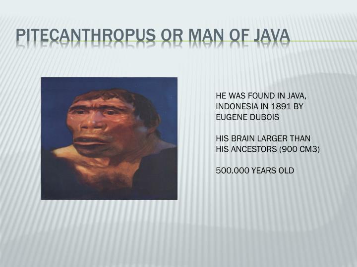 PITECANTHROPUS OR MAN OF JAVA
