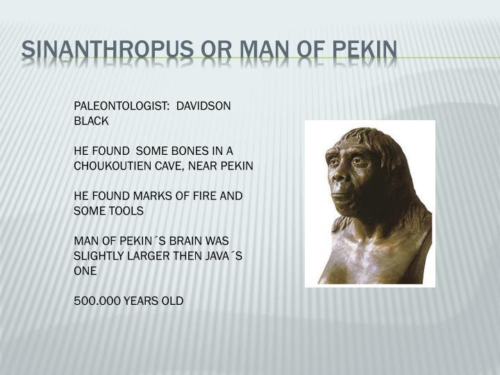 SINANTHROPUS OR MAN OF PEKIN