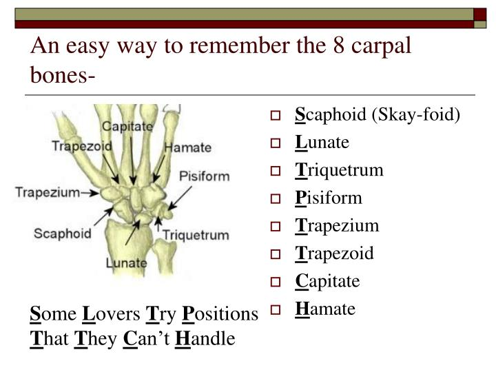 An easy way to remember the 8 carpal