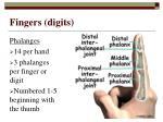 fingers digits