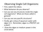 observing single cell organisms